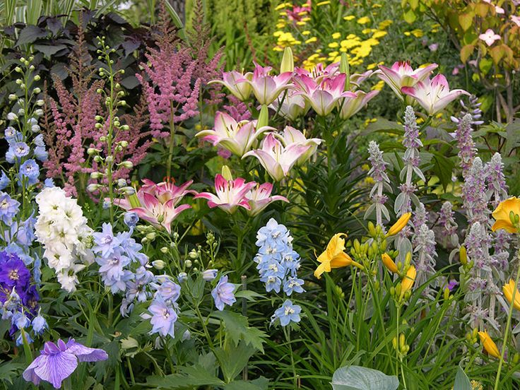 6 steps to a beautiful perennial border