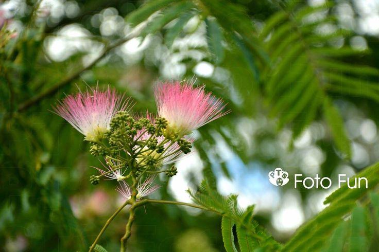 Pink flowers in Te Koutu park, Cambridge, NZ