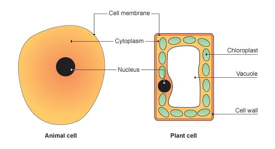 Cell membrane research paper