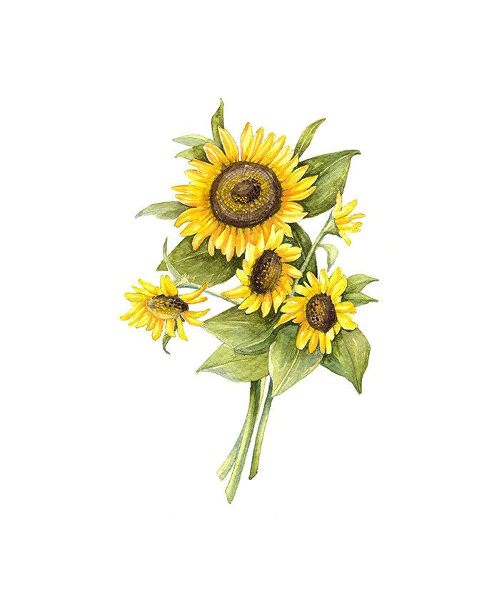 watercolor vase of sunflowers