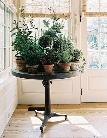 table for potted plants