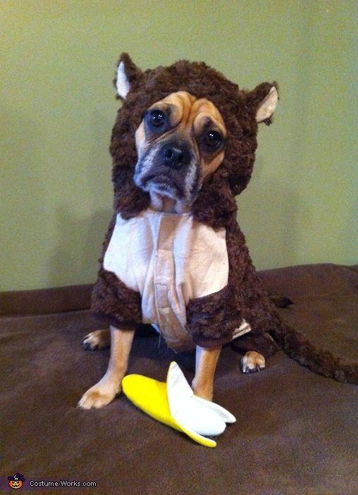 monkey costume - Pet Halloween Photo Contest