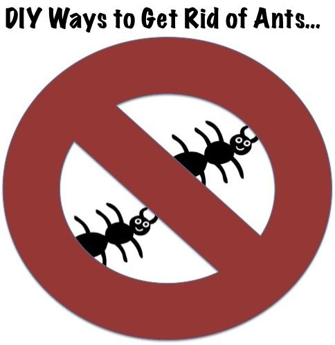 Reader Tips: 25 Ways to Get Rid of Ants!
