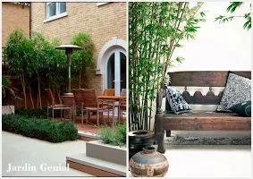 Бамбук в ландшафтном дизайне  В садах Европы бамбук становится  очень популярным.  Эффектен бамбук в кадках на террасах,  оформление внутренних двориков,  создание более приватной атмосферы, —  это все можно применить в  декоративном садоводстве.  Сочная зелёная листва, стебли  разных расцветок и форм подходят  к любому саду и прекрасно  гармонируют с цветами и деревьями.   При выращивании бамбука на  открытом грунте необходимо учесть,  что бамбук быстро разрастается, захватывая территорию…