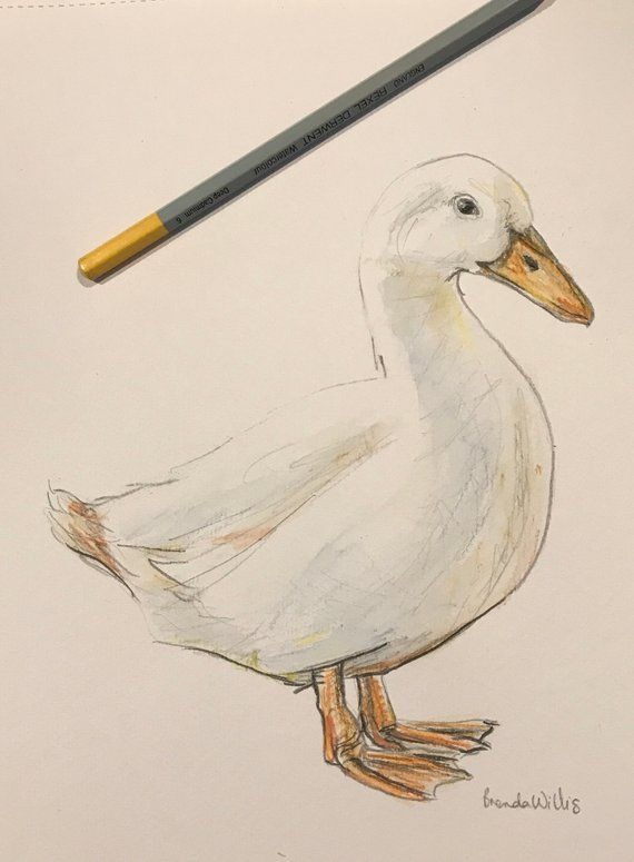 Original hand drawn white duck watercolour drawing artwork. A4 ...
