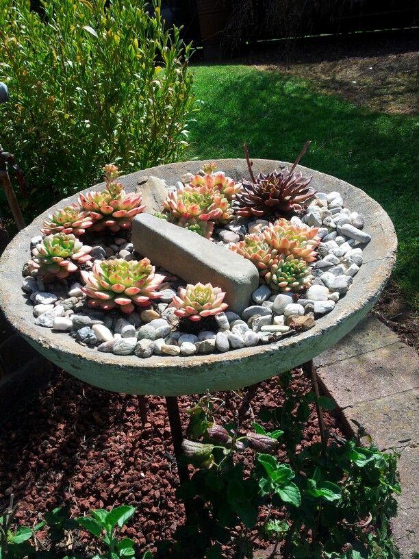 Succulent Garden In Old Concrete Bird Bath That No Longer Held Water