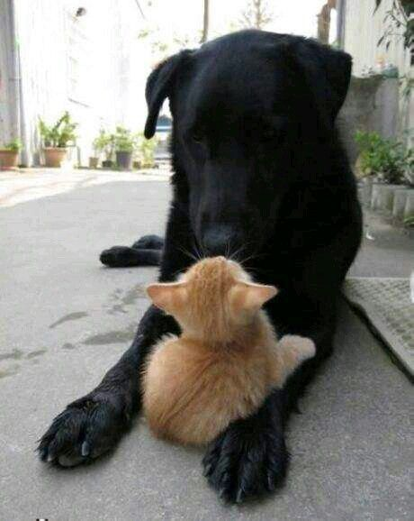 Dost arkadaş