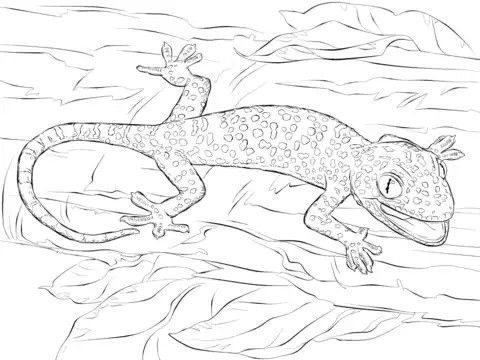 realistic tokay gecko coloring page from gecko lizard category select from 28415 printable crafts of cartoons nature animals bible and many more - Gecko Coloring Pages