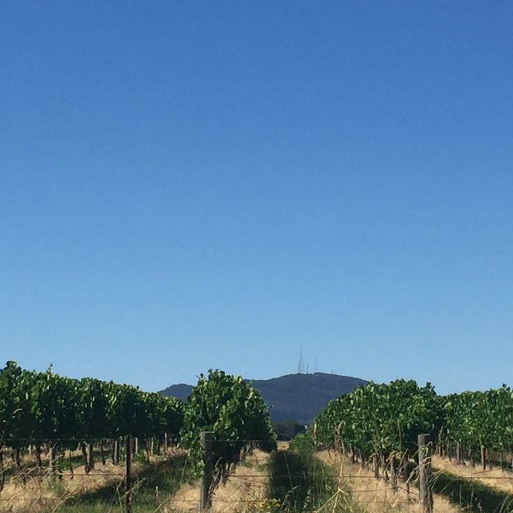 Mount Canobolas, Chardonnay country