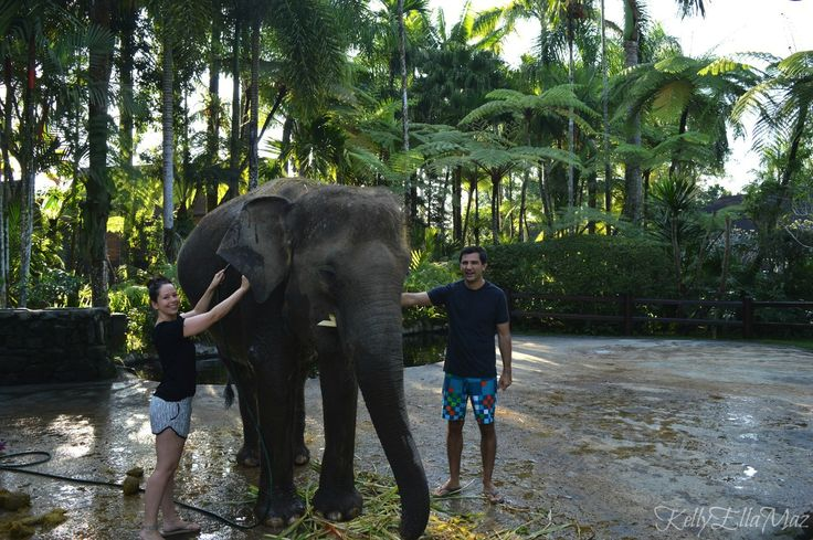 Washing elephants in Bali