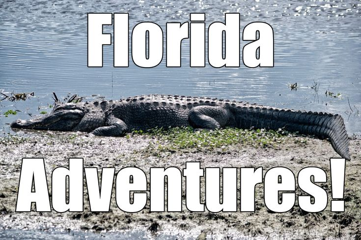Florida Adventures!