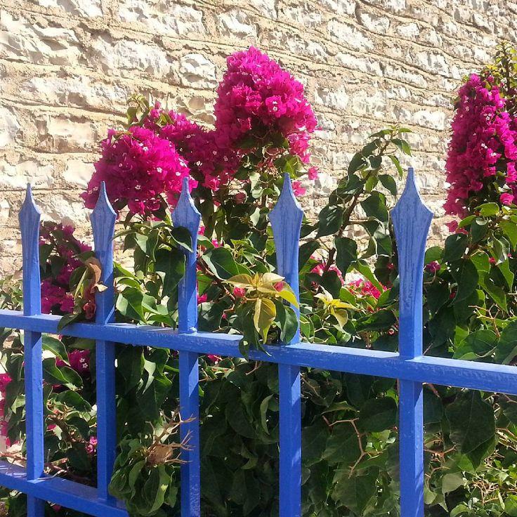 Colors..  #Greece #Hellas #ippomare #summermood #summer #holiday #vacation #lovegreece #naturelovers #nature #nofilter #flowers #flowerstagram