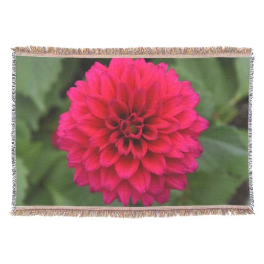 Red Dahlia Throw Blanket by www.zazzle.com/htgraphicdesigner* #zazzle #gift #giftidea #dahlia #throw #blanket #red #flower #mothersday