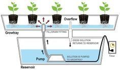 homemade ebb and flow hydroponic system #hydroponicshomemade