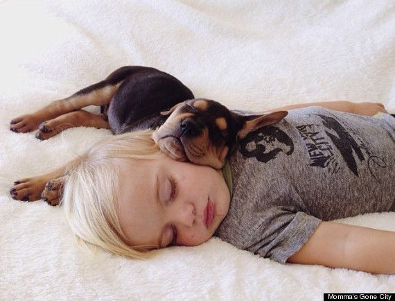 Best Theo And Beau Images On Pinterest Adorable Animals - Theo beau cutest animal human pairing ever