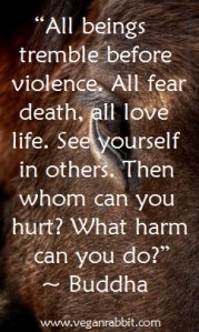 Basic Human Rights Principles...: Buddha Quotes,  Dust Jackets, Books Jackets, Equestrian Quotes, Vegans, Fear Death,  Dust Covers,  Dust Wrappers, Animal
