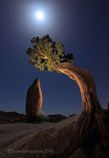 Joshua Tree Leaning Juniper & Balanced Rock by Steve Sieren Photography, via Flickr; Joshua Tree National Park, California