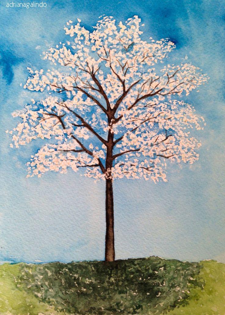 Ipe Branco, árvore 9 / Brazilian tree / n.9 - aquarela / watercolor / 21 x 15 cm - 40 trees project By Adriana Galindo - drigalindo1@gmail.com