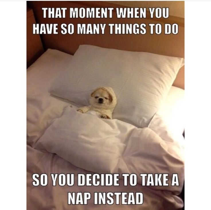 That moment when you have so many things to do, so you decide to take a nap instead.