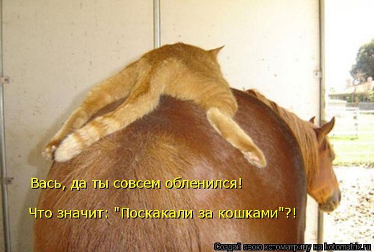 Смешные картинки с лошадьми и надписями, картинки осенний лес