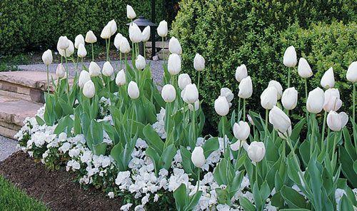 comment r u00e9ussir un petit jardin blanc et vert en utilisant