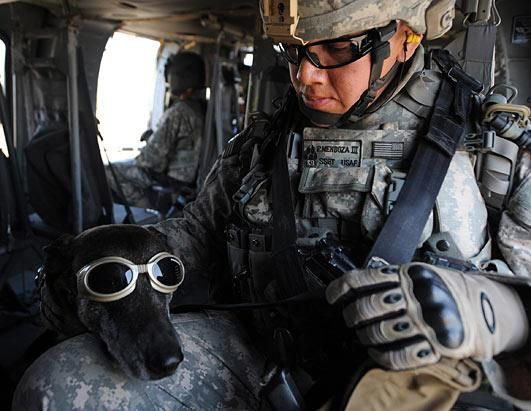 Navy SEAL Dogs #dog #navy #military: Military Dogs, Military Work Dogs, Heroes, Dogs Breeds, Navy Seals, Memories Day, Military Working Dogs, Animal, War Dogs