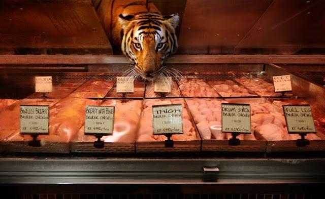 shopping tiger