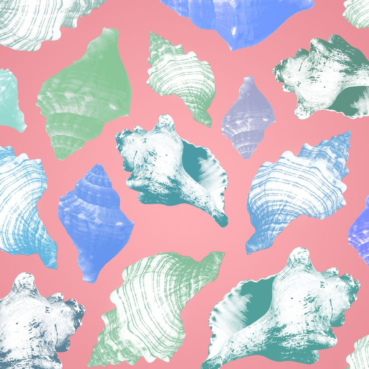 summer conch, turban[wreath top] shell pastel color pattern
