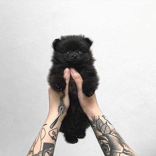 #Repost @darkintuitive  #Darkintuitive . . #dark #darkness #black #witch #goth #gothic #victorian #culture #gothfashion #victorianfashion #gothstyle  #altfashion #alternative #amazing #gothgirl #gothicfashion #gothgoth #gothboy #medieval #pagan #gothicmodel #hellodarkness #beautiful #white #allblackeverything