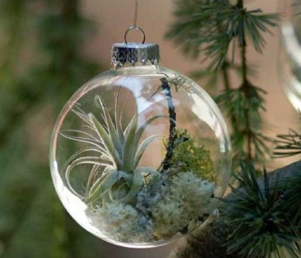 Tree Ornaments With Living Plants from Home Concepts Decoration ~ While this trendy item is listed as an ornament, I'm placing it on my Garden Delight Board.  Wouldn't a grouping of these look smashing suspended in front of the kitchen window?  ♥ ♥ ♥