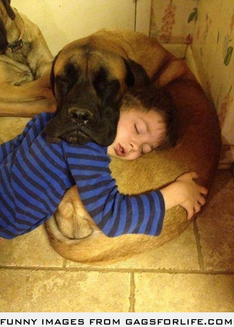 Mutual pillow. Awww