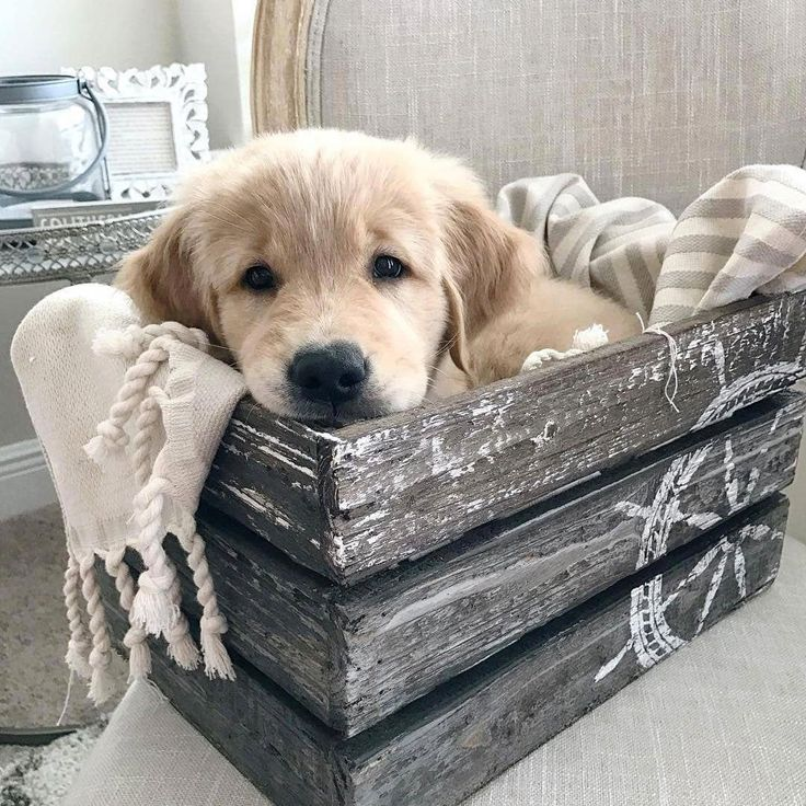 Pup in a box! Tag your friends who need to see this cutie Don't forget to follow…