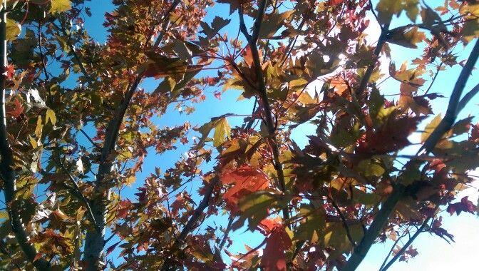 Fall photogs