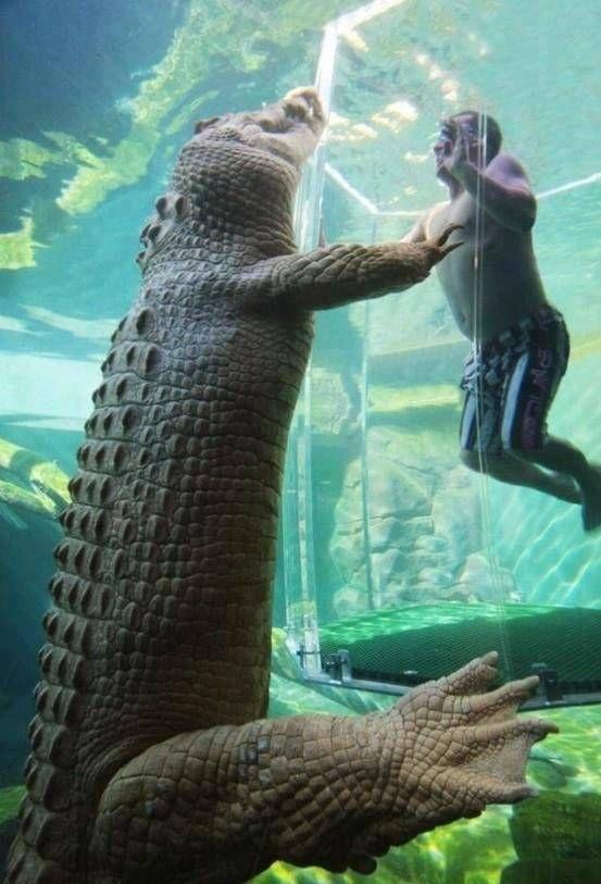 Darwin Crocodile Park - Crocosaurus Cove, Australia - (16 Pictures)