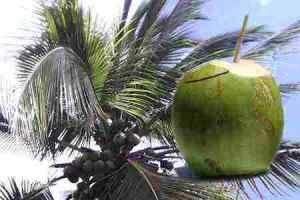 21 Propiedades del Agua de Coco