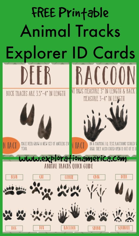 Free Printable Animal Tracks Explorer ID Cards - a fun way for kids to get outdoors and identify animals by their tracks. LOVE the simple earthy design. Great for science centers, Montessori, preschool, scavenger hunts and nature hikes. Just print, laminate, and maybe add onto a notebook ring.