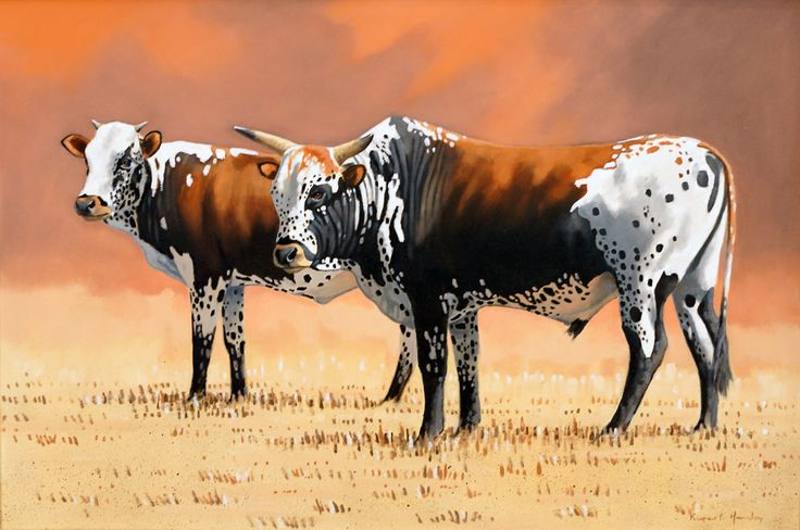 nguni cattle pictures - Google Search