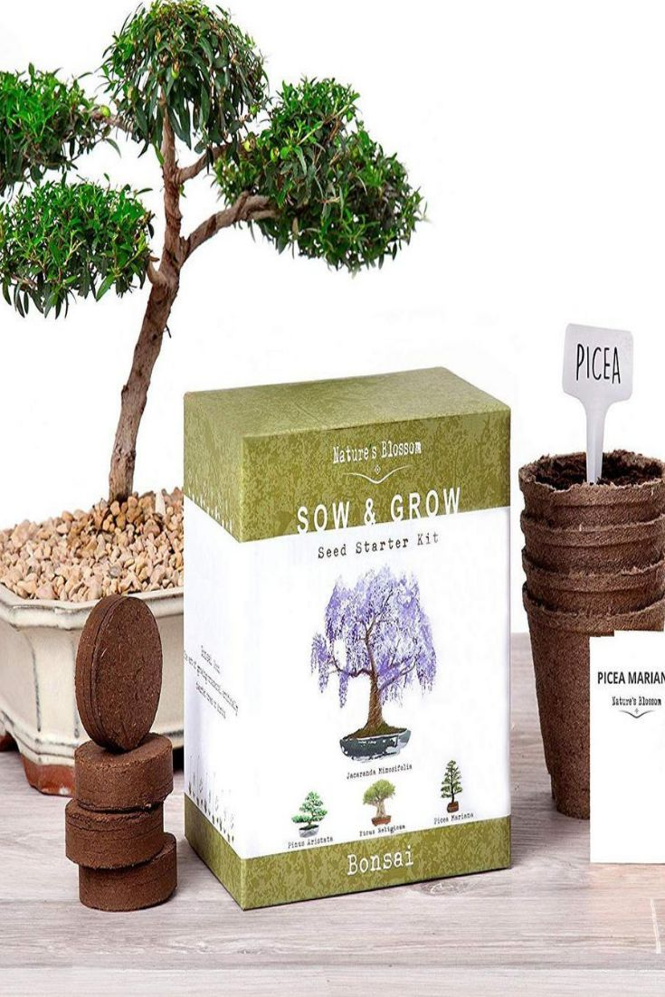 Nature S Blossom Bonsai Growing Kit Grow 4 Types Of Miniature Trees Set With Seeds Soil Planting Pots Labels And Growing Guide X00108aayd The Home Depo Planting Pots Tree Seeds Bonsai Tree Types