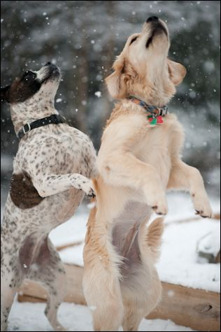 catching snowflakes with my friend
