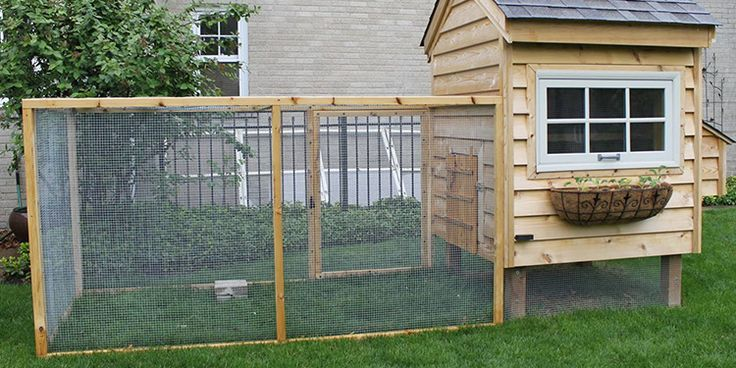 How to build a chicken coop and all the many features that can …