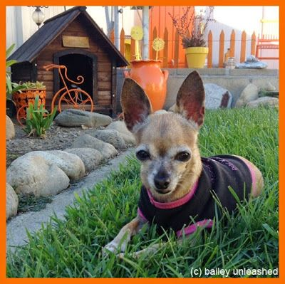 Southwestern dog house for la chihuahua. #PinMyDreamBackyard