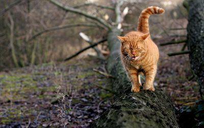 Scarica sfondi animali domestici, gatto rosso, piedi