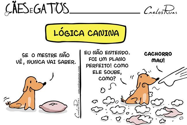 Cães e Gatos 6