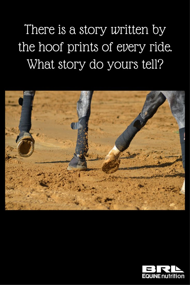 Pics photos quote i wrote for my horse com account s equestrian - What Story Do Your Hoof Prints Tell Horse Quote Hoofprints