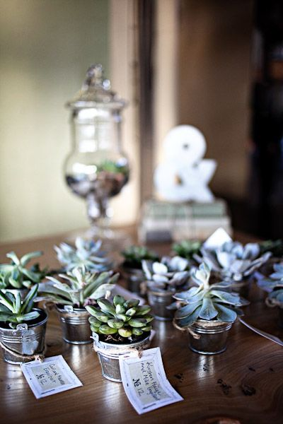 Succulent Potted Favors and Place Cards. Photo by Angela & Evan!