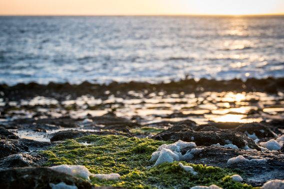 Nieuw in mijn Werk aan de Muur shop: Groen aan de kust