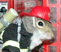 Squirrel firefighter