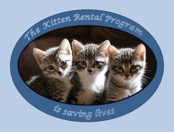 """This report was initially intended to form part of a PWB story scheduled for August. But its message is so important and urgent, it merits its own story, with a plea to anyone who can help. The warmer months of Spring and Summer are known as """"kitten..."""