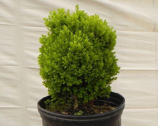 Feeney's Wholesale Nursery - Buckingham, PA - Wholesale Plants to ...
