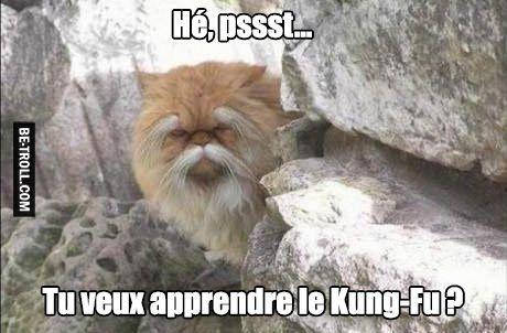 Vieux prof de kung-fu à disposition.